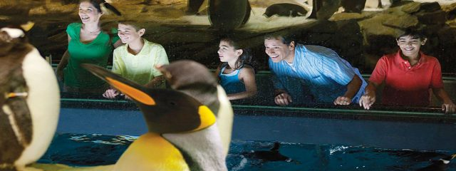 Image for Penguin Encounter