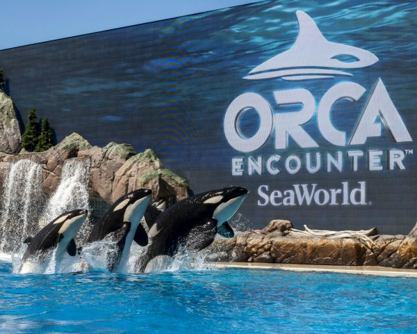 Image for Orca Encounter