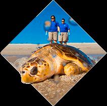 Beach turtle
