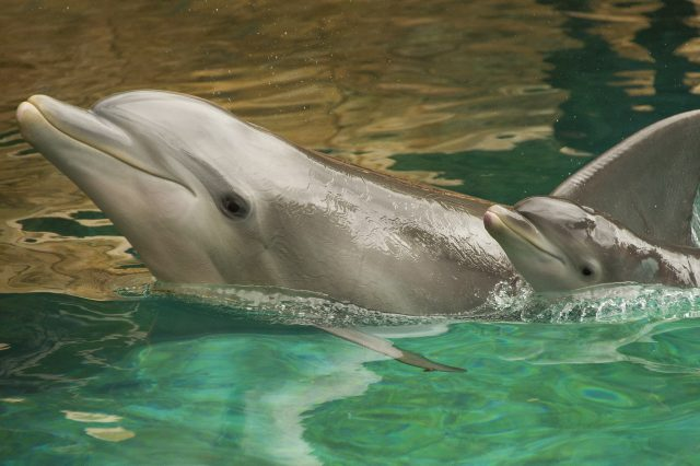 Baby Boom At Discovery Cove With Five Newborn Dolphins thumbnail image