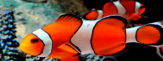 Image for Aquarium De La Mer