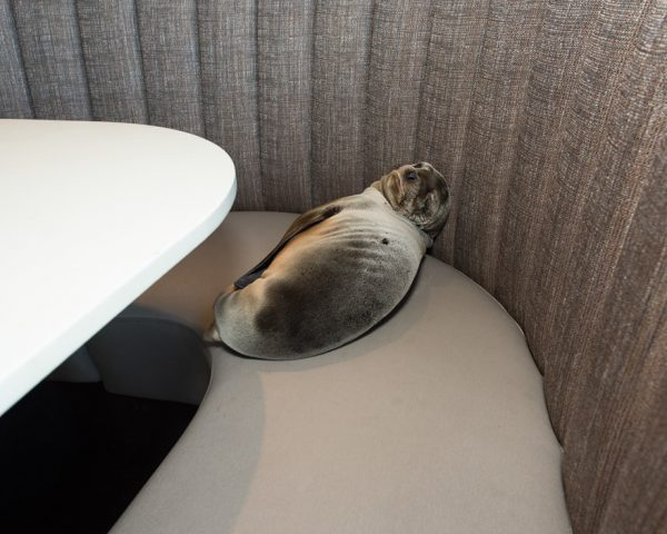 SeaWorld rescues stranded sea lion in California restuarant
