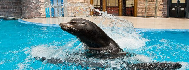 Image for Sea Lions Live