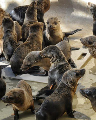 SeaWorld San Diego donates $30,000 to California rescue centres
