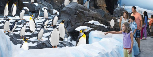 Image for Antarctica: Empire of the Penguin