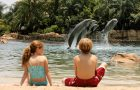 Book Discovery Cove Packages Early for 2020 and Save up to 20% thumbnail image