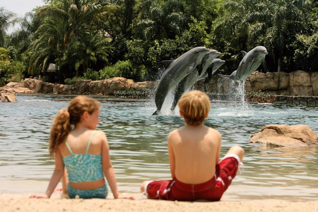 Book Discovery Cove Packages Early for 2020 and Save up to 20%