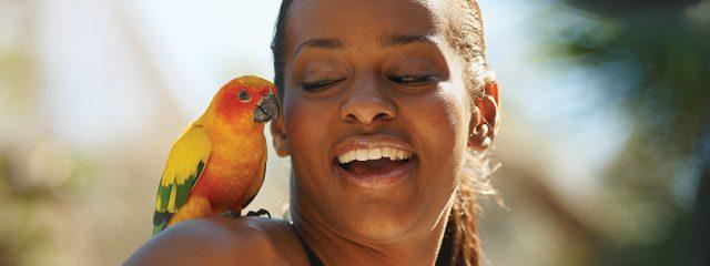 Image for Bird Gardens