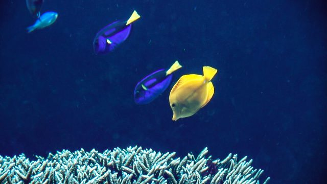 Breeding Dory Safely And Sustainably