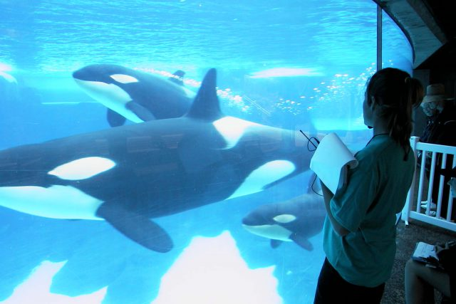 SeaWorld Entertainment, Inc. Announces Support For The National Fish And Wildlife Foundation's Killer Whale Research And Conservation Programme
