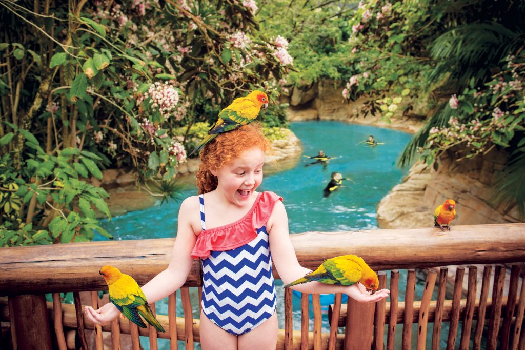 Aviary - Discovery Cove