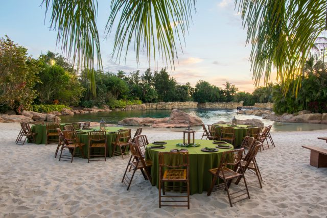Dine alongside Dolphins during Paradise Nights at Discovery Cove