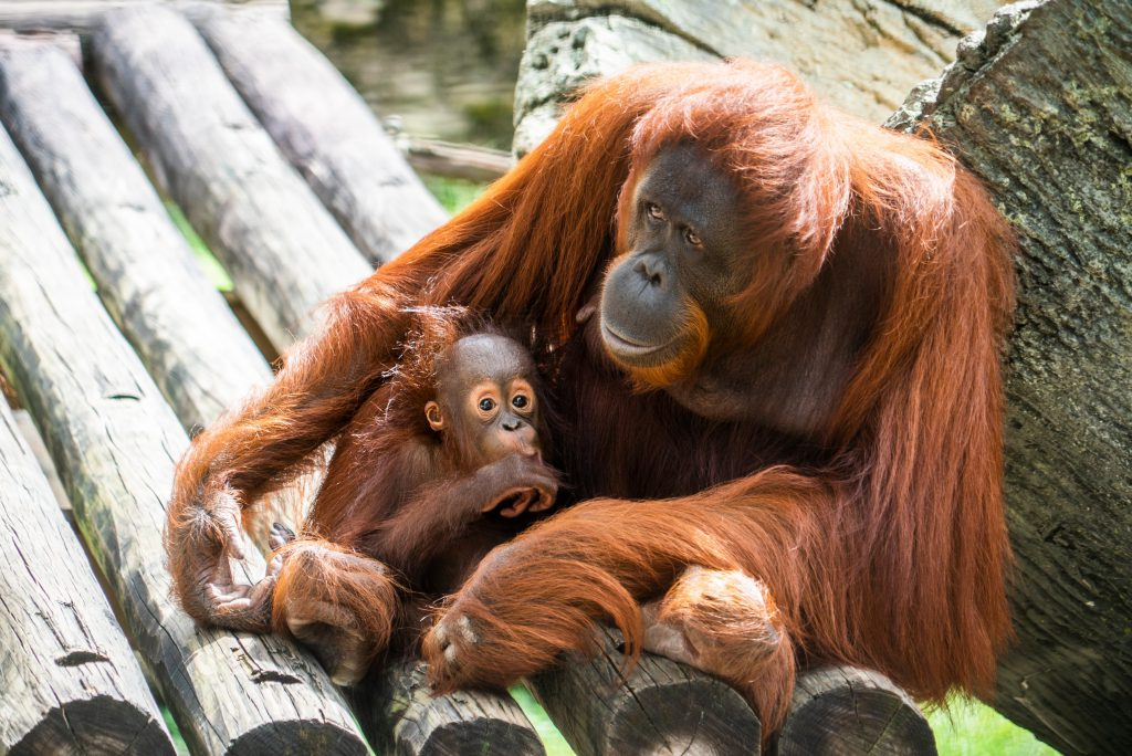 Baby animals thrive at Busch Gardens, providing hope for endangered species