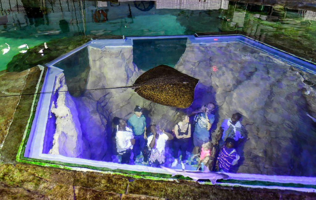 Get a Peek Behind-the-Scenes at SeaWorld's Inside Look