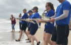 Fifteen Rehabilitated Sea Turtles Returned To The Atlantic Ocean thumbnail image