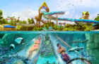 Experience a new water slide adventure at Aquatica this Spring thumbnail image